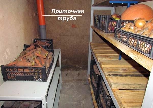 Hranenie-ovoshhej-v-podvale-garazha.jpg