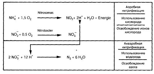 vzaimodejstvie-mezhdu-anaerobnymi-i-aerobnymi-bakteriyami-i-vozduhom.png